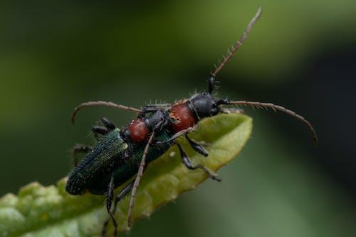 Бесплатное стоковое фото с антенна, жук, лист