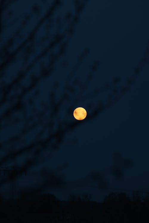 Безкоштовне стокове фото на тему «вертикальні постріл, вечір, місяць»