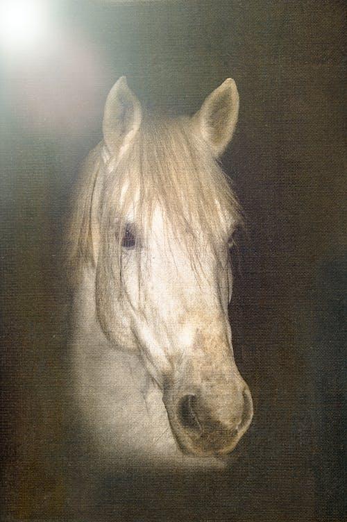 Kostnadsfri bild av häst