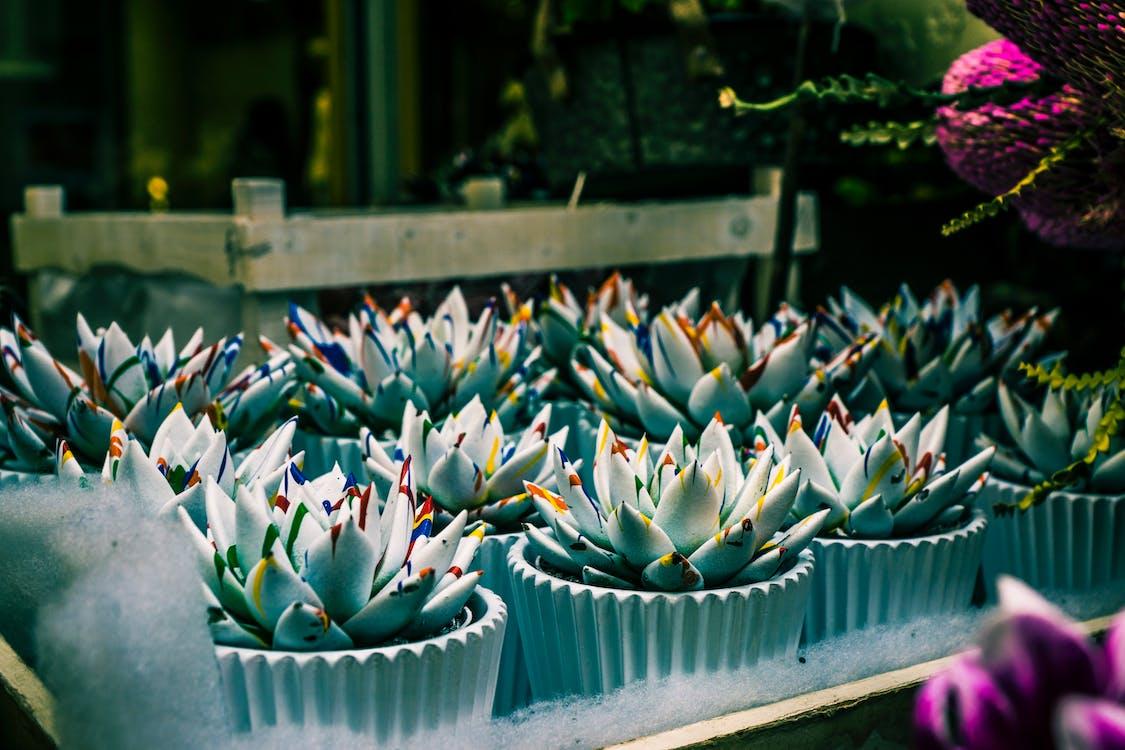 botanical shop and garden