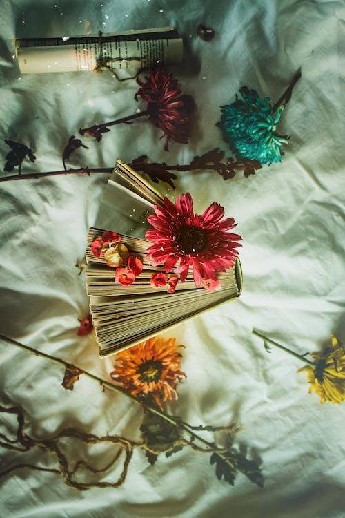 Photos gratuites de amour, art, automne