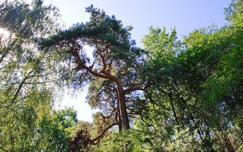 Darmowe zdjęcie z galerii z błękitne niebo, drzewa, gałęzie, krajobraz