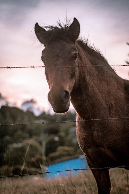 A Close-Up Shot of a Horse