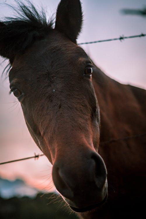A Close-Up Shot of a Brown Horse
