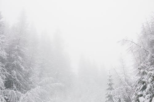 ağaçlar, buğulu, buz tutmuş, doğa içeren Ücretsiz stok fotoğraf