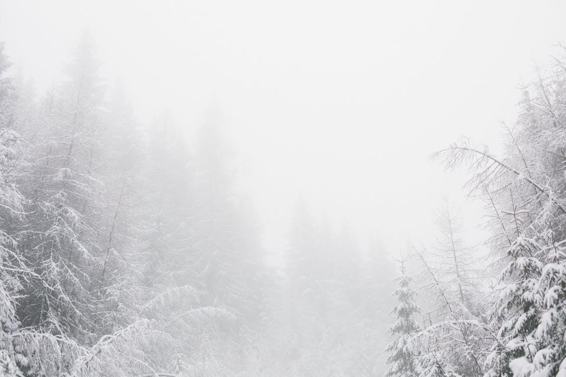 anotimp, arbori, ceață
