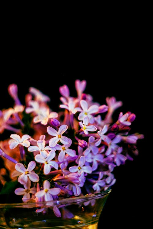Close-Up Photo of Purple Lilac Flowers in a Glass Vase