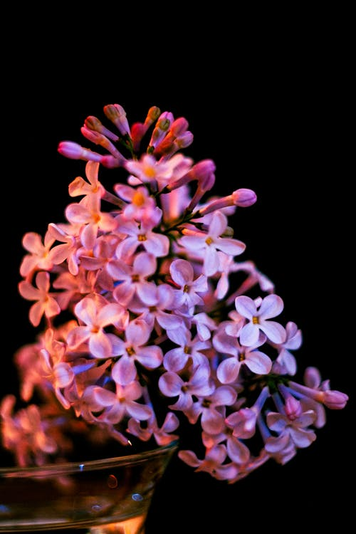A Close-Up Shot of Lilac Flowers