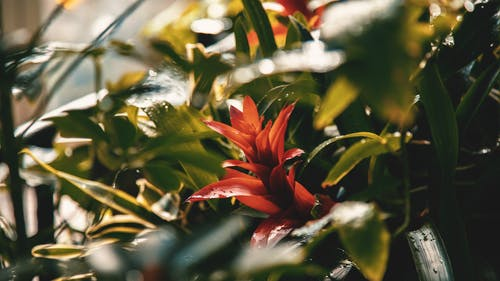 Free stock photo of flower, plant