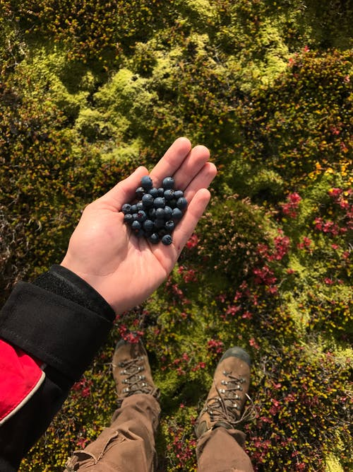 Person Holding Black Round Fruits