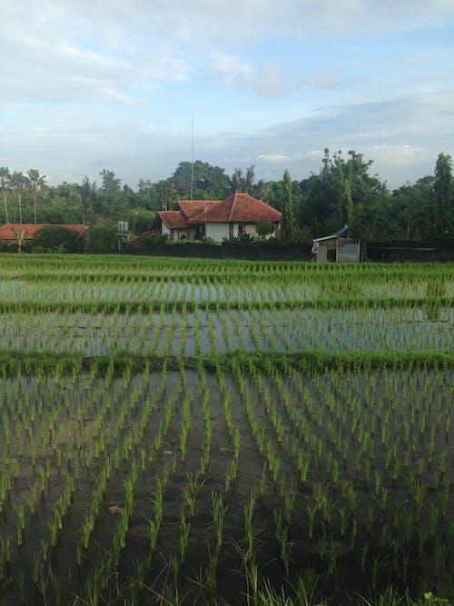 คลังภาพถ่ายฟรี ของ กลางวัน, กลางแจ้ง, การเกษตร