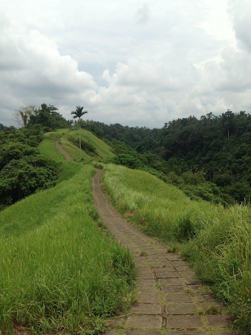 Brown Pathway Between Green Grass Field