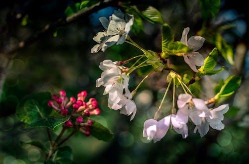 咲く, 春, 自然の美しさの無料の写真素材