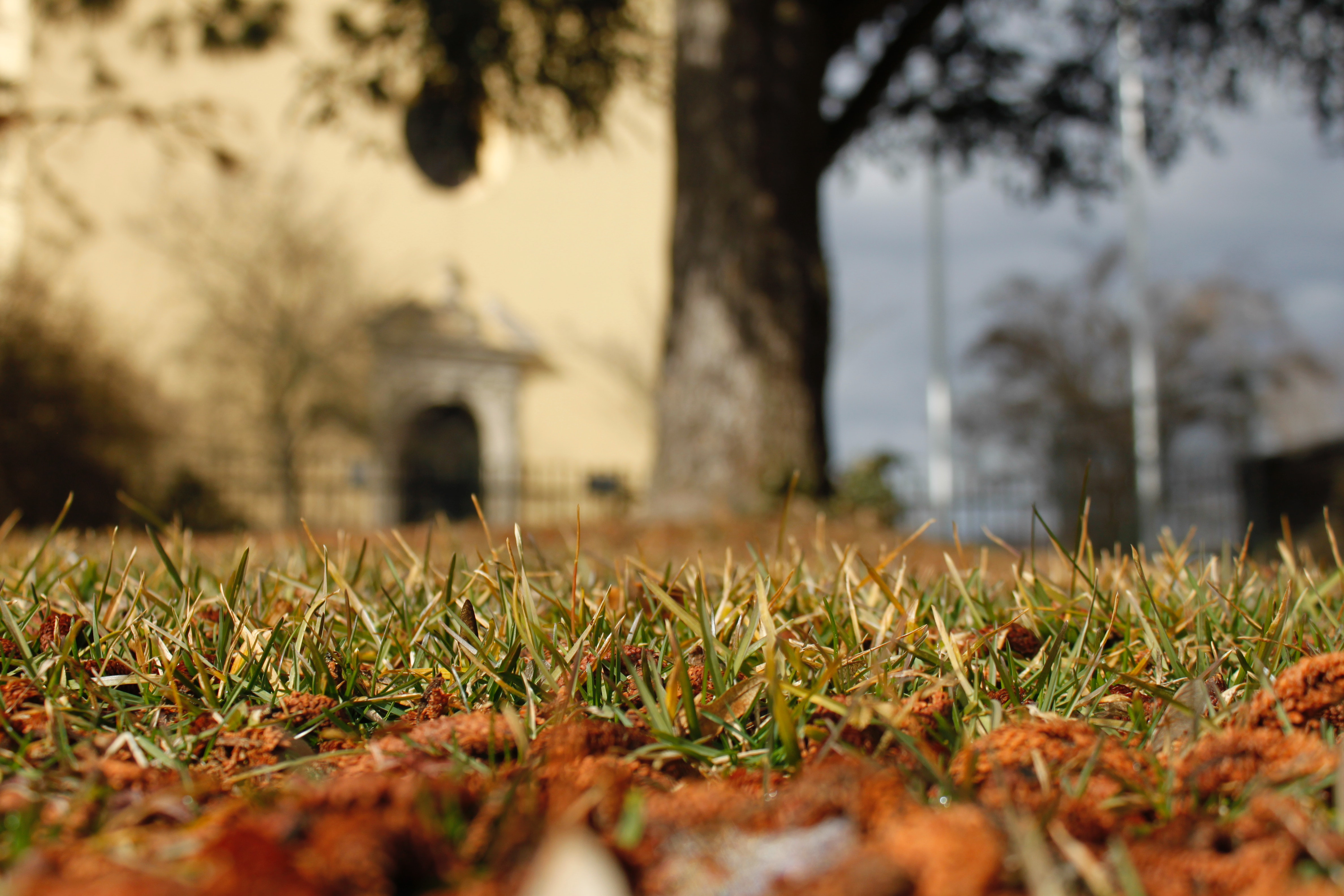 Worms Eye View Of Grass Free Stock Photo