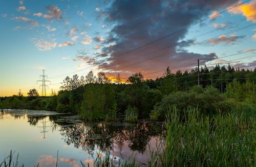 Immagine gratuita di acqua, alba, alberi, ambiente