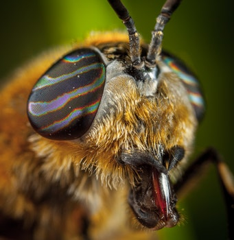 Close-Up Photo Of Insect