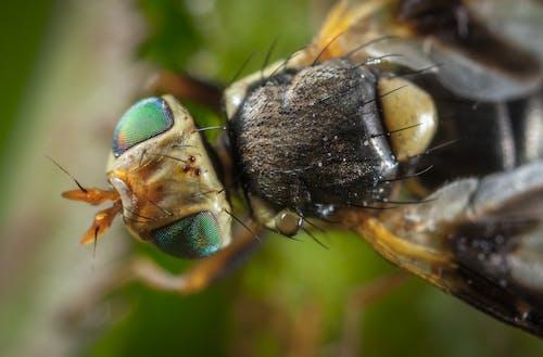 Gratis lagerfoto af behåret, close-up, insekt, lille