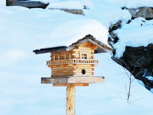 Безкоштовне стокове фото на тему «Австрія, Денне світло, застуда, зима»