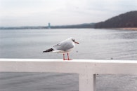 Photo of Gray and White Bird Perched on White Wooden Railing