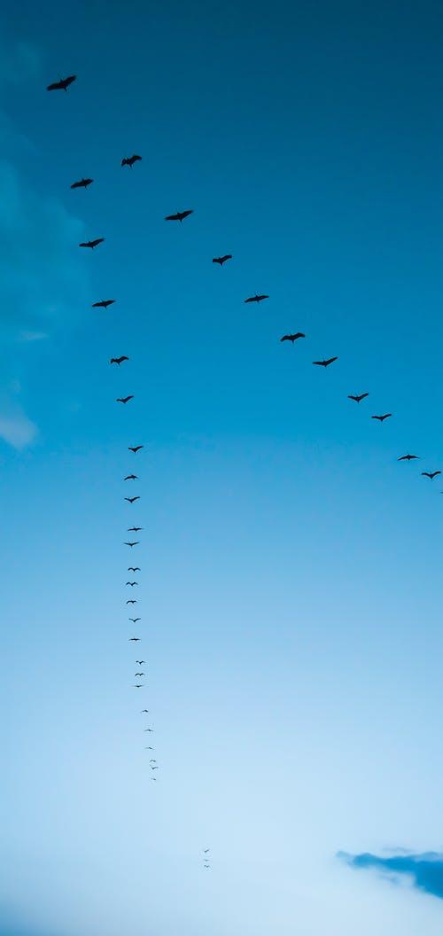 Free stock photo of bird, bird flying, bird nest