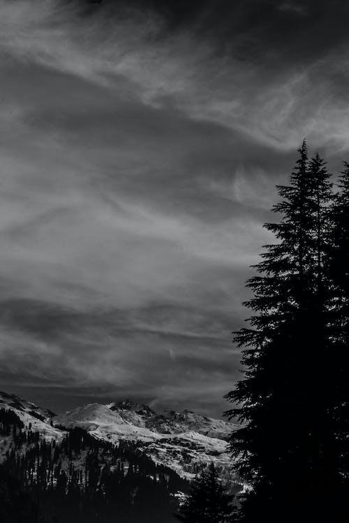 Foto d'estoc gratuïta de arbre, arbres, blanc i negre, cel
