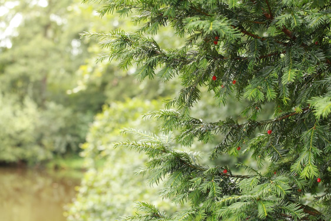 Бесплатное стоковое фото с деревья, лес, папоротник