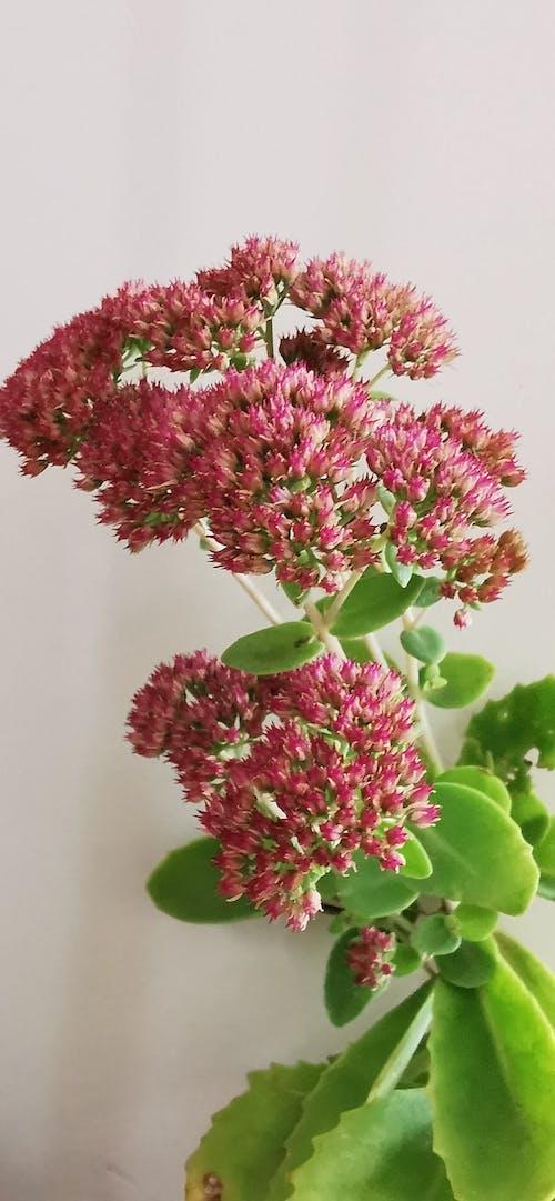 Foto stok gratis bunga yang indah, tanaman dalam ruang, tanaman hias