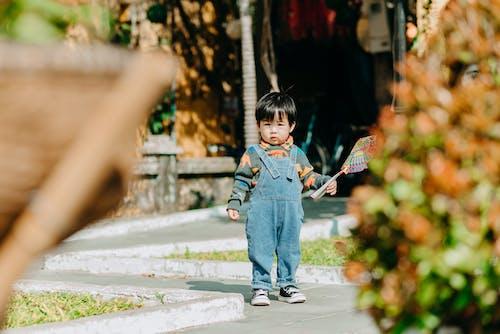 Free stock photo of boy, child, cute