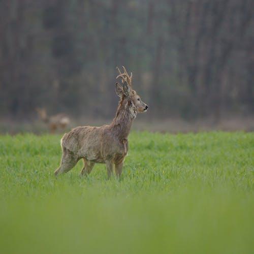 Immagine gratuita di animale, caccia, campo