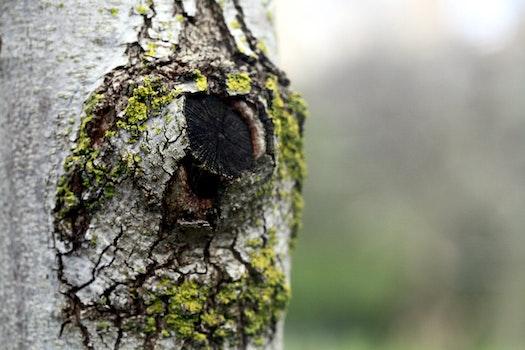 Free stock photo of nature, tree, detail, theme good-morning