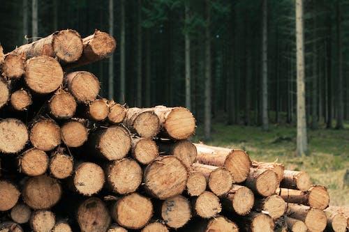 Photos gratuites de arbres, bois, bois de charpente