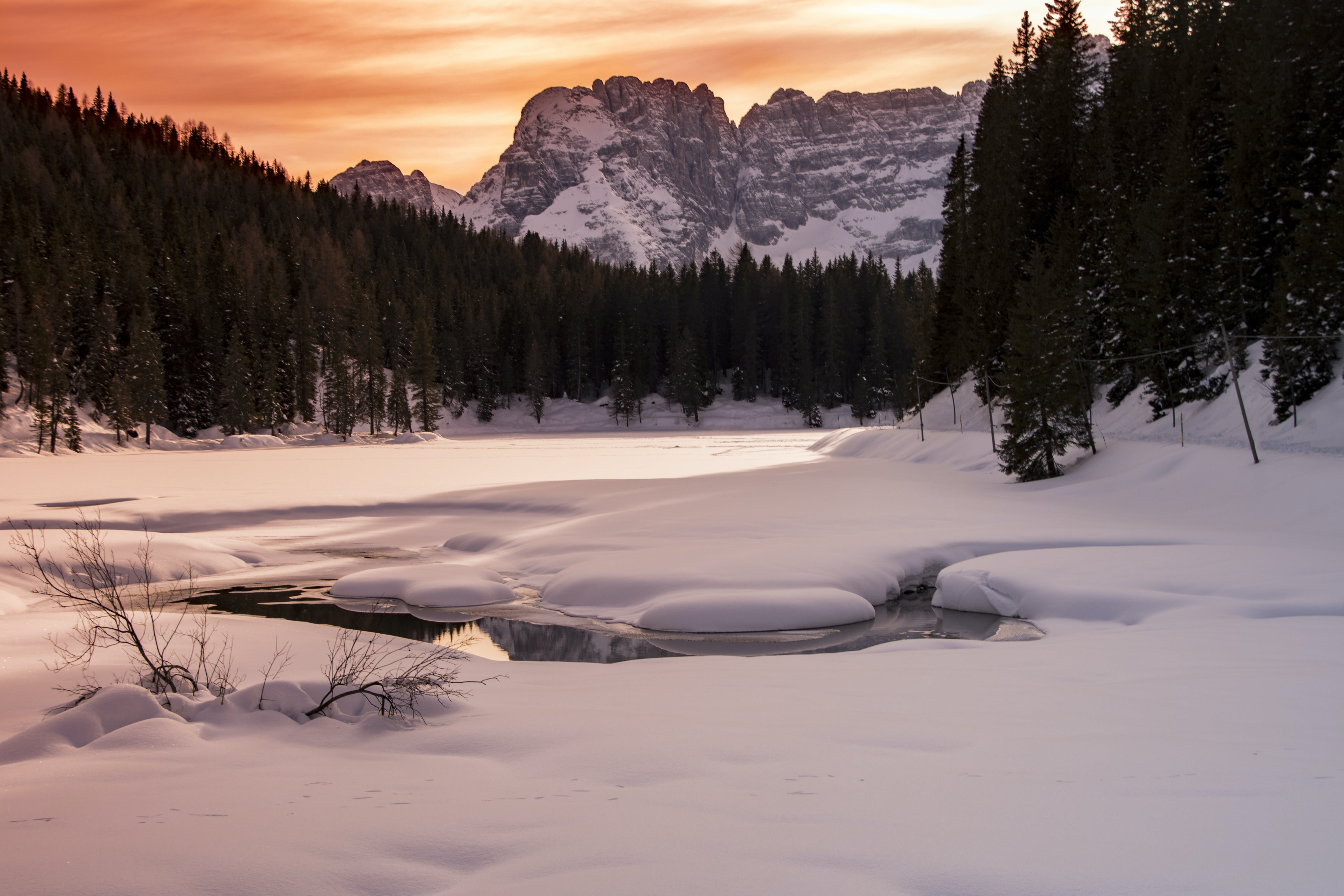 Snow Coated Land Across Pine Trees during Sunset