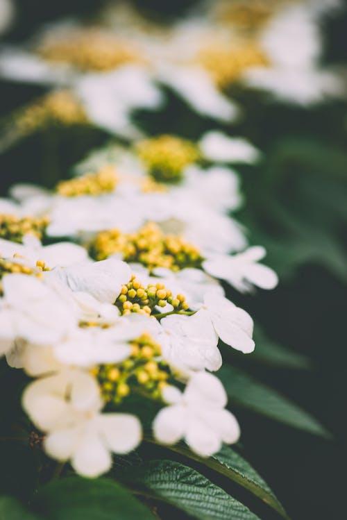Fotos de stock gratuitas de flores de boda