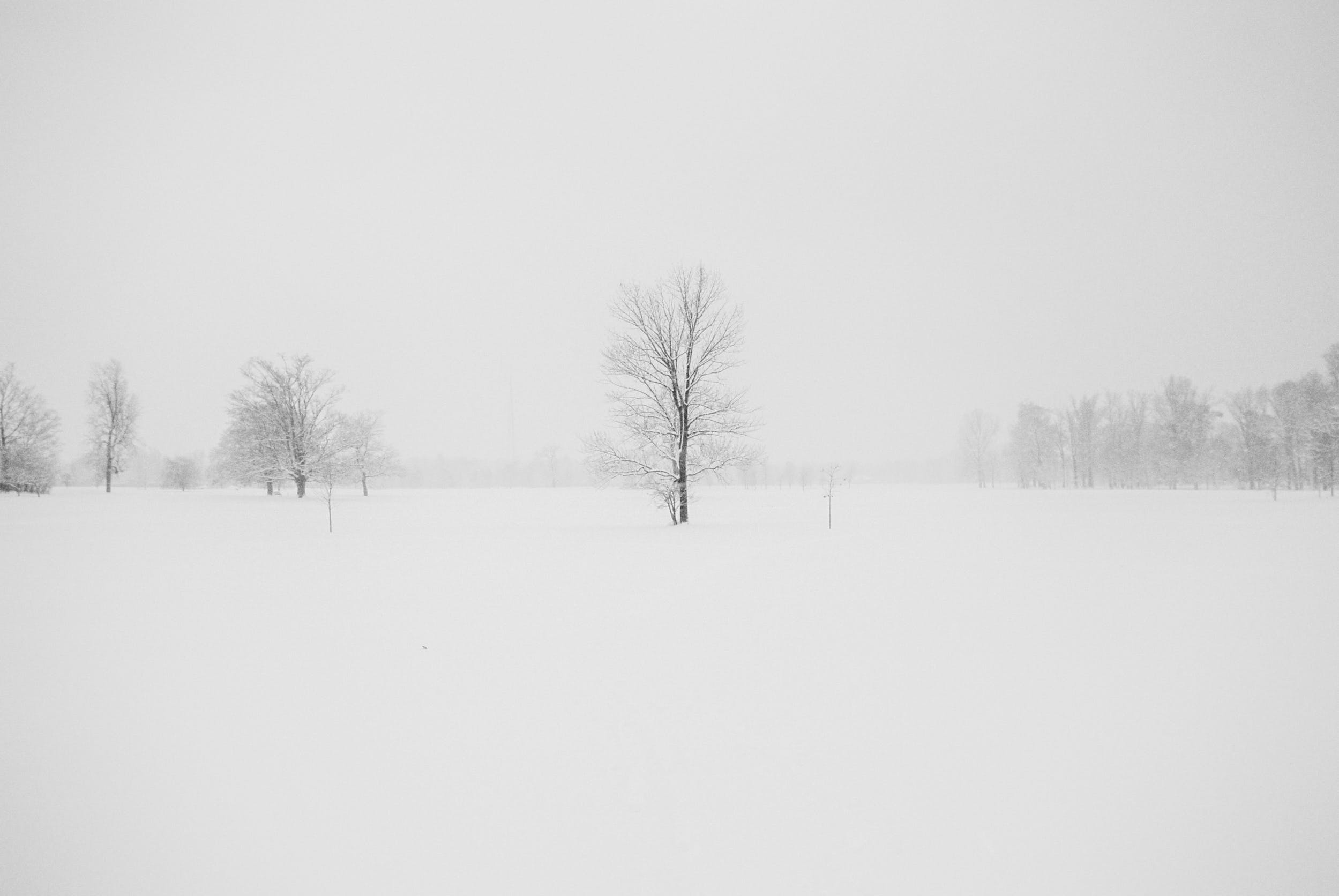 Photography of Leafless Tree Surrounded by Snow