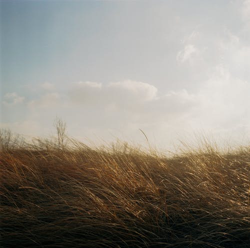Photo of Grassland