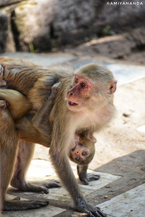คลังภาพถ่ายฟรี ของ กอด, การกอด, การถ่ายภาพสัตว์, การถ่ายภาพสัตว์ป่า