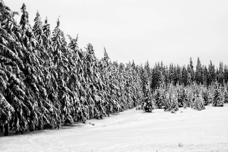 Δωρεάν στοκ φωτογραφιών με ασπρόμαυρο, γραφικός, δασικός, δέντρα