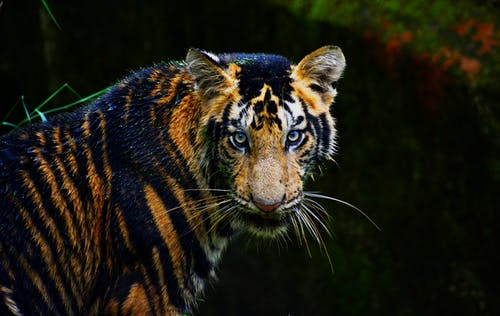 คลังภาพถ่ายฟรี ของ ซาฟารี, นักล่า, สวนสัตว์, สัตว์