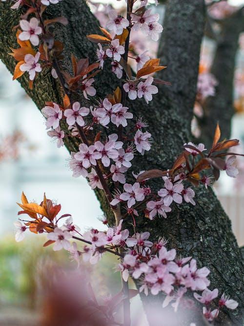 Безкоштовне стокове фото на тему «весна, квітка, Природа»