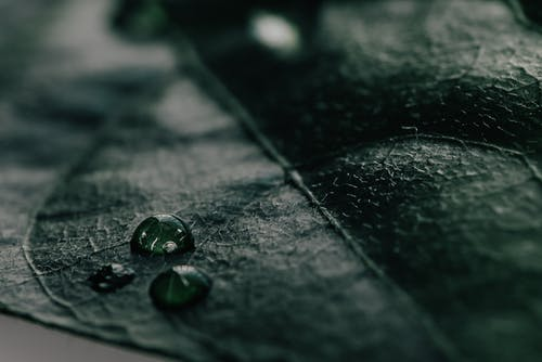 Dark green leaf with drops of water
