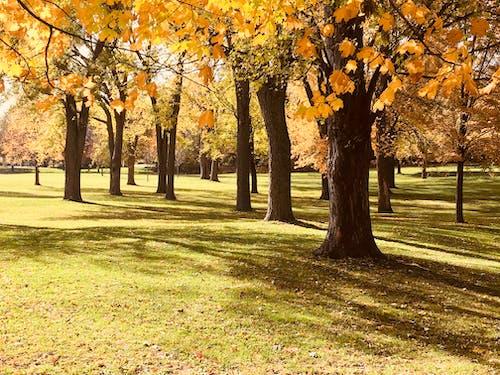 Gratis lagerfoto af park, solopgang, træer
