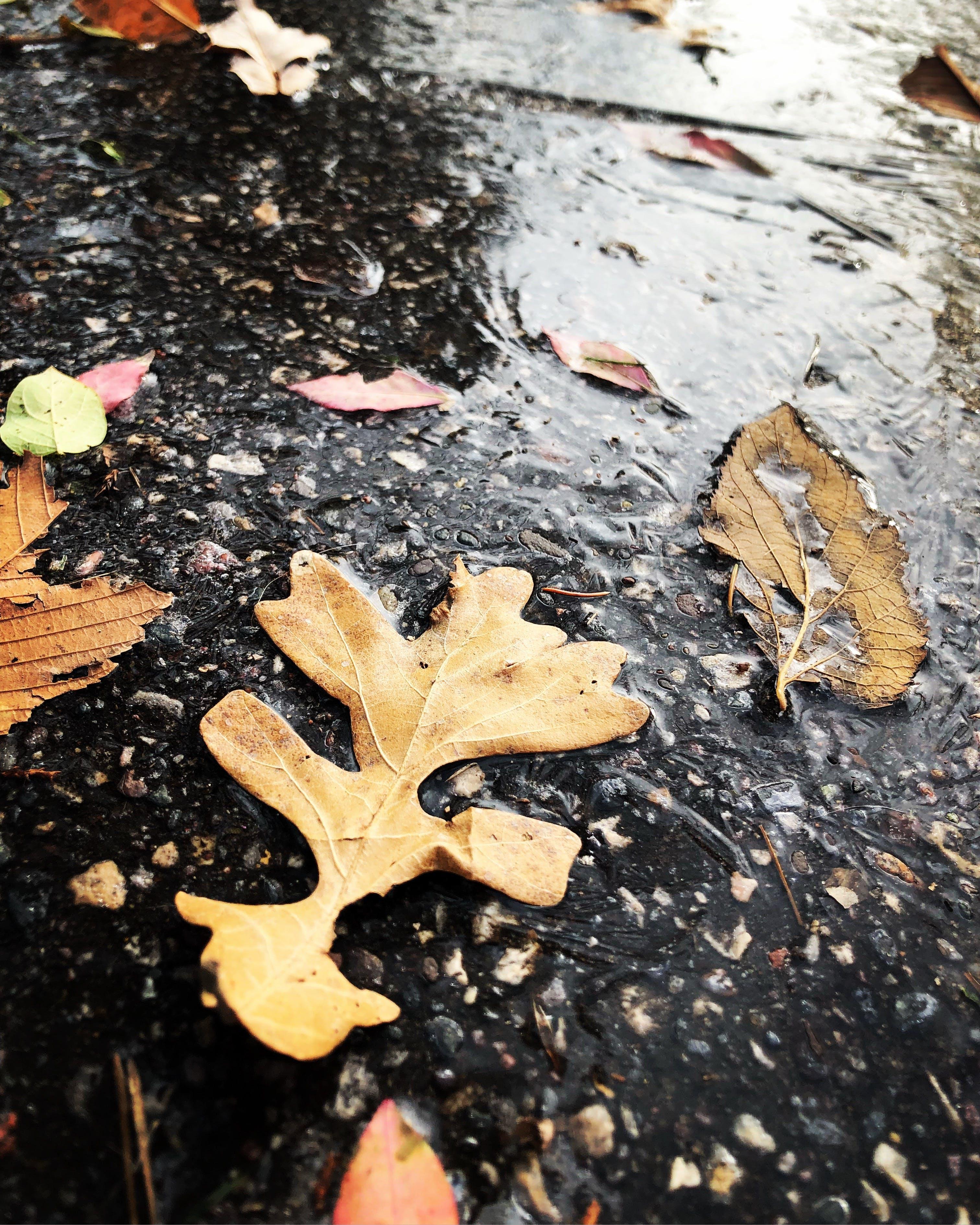 Základová fotografie zdarma na téma mletý, mokrý, sezóna, suché listí
