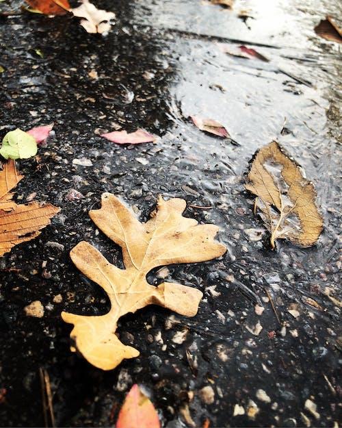 Darmowe zdjęcie z galerii z mokry, pora roku, rozdrobniony, suche liście