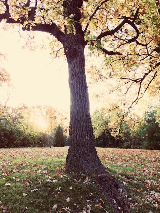 sollys, træ