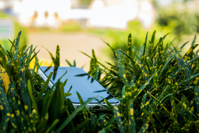 Imagine de stoc gratuită din adâncime de câmp, concentrare, creștere, ecran