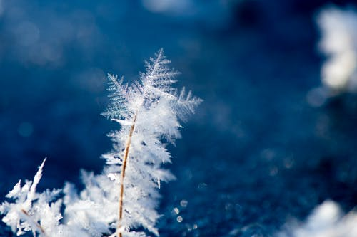 Gratis stockfoto met besneeuwd, bevroren, close-up, concentratie