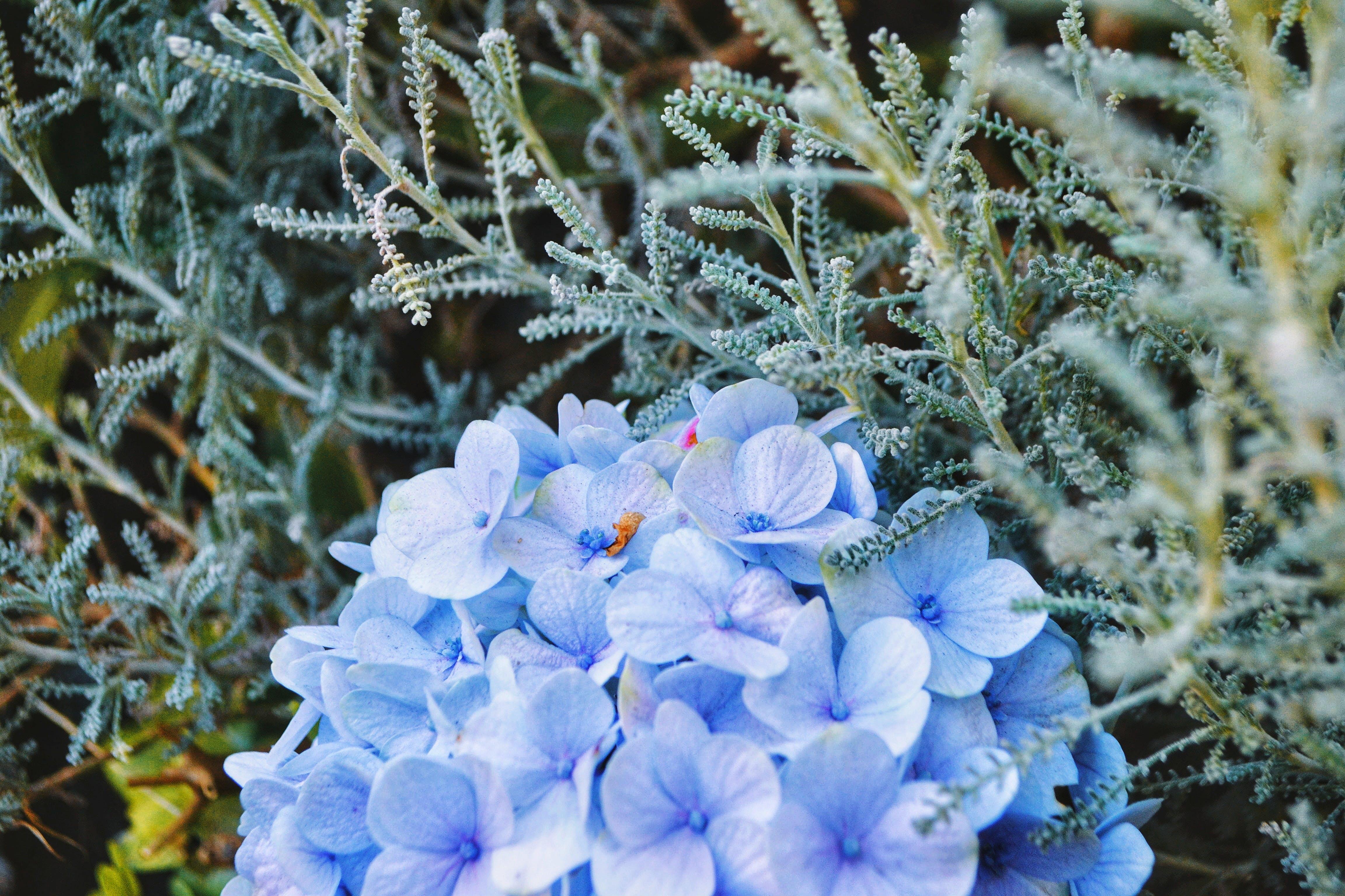 Gratis lagerfoto af baggrund, blå, blomst, farve