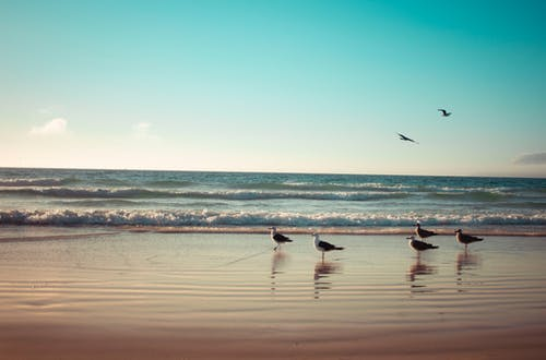 Free stock photo of animals, beach, birds