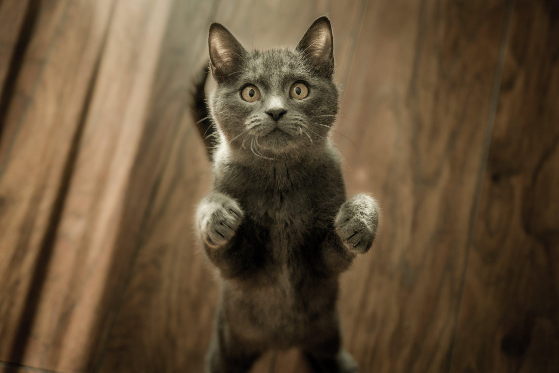 Is your cat Smart