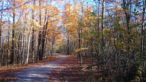 Free stock photo of fall leaves, pathway, trail